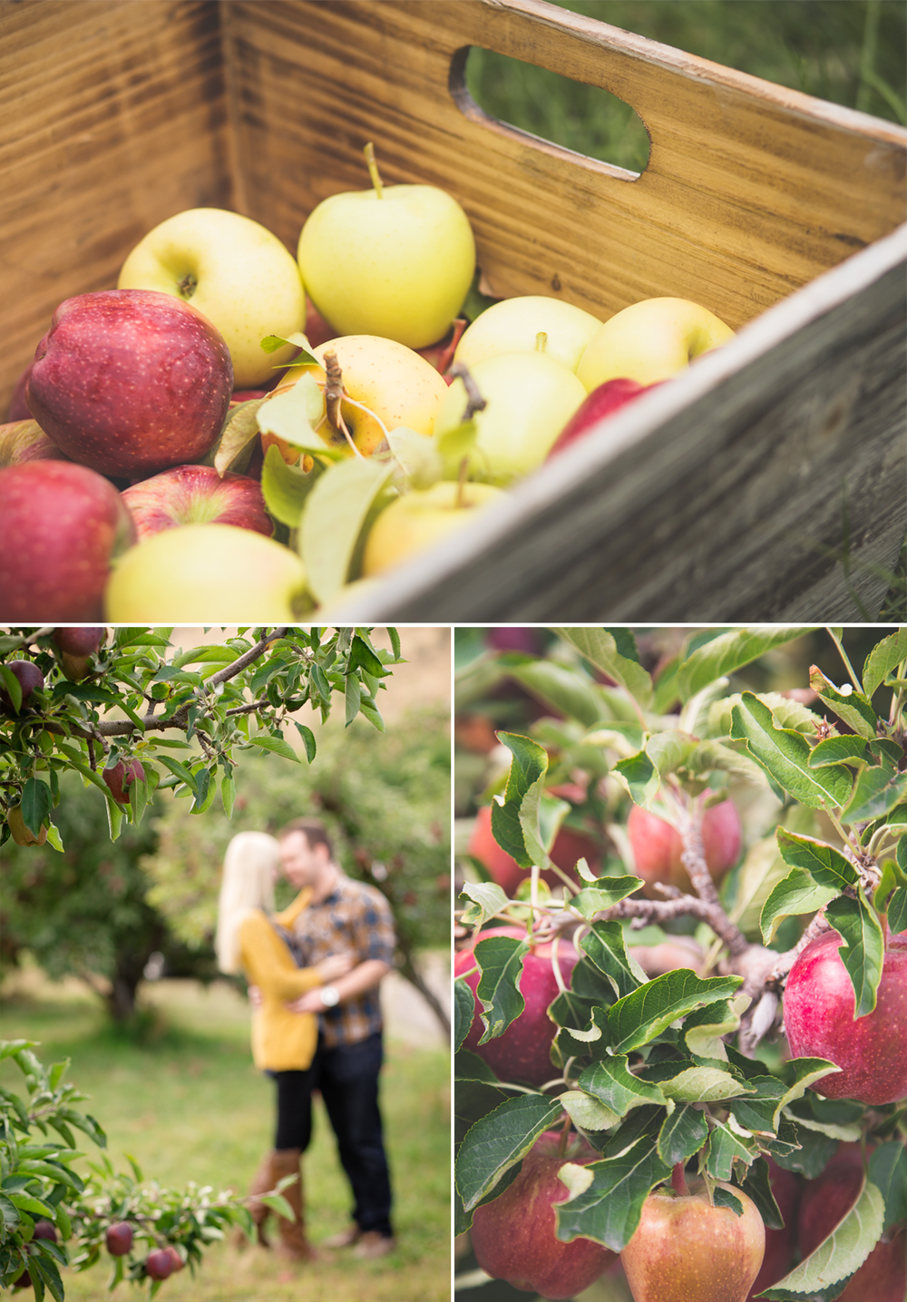 Boise-Photographer-Apple-Orchard-Session
