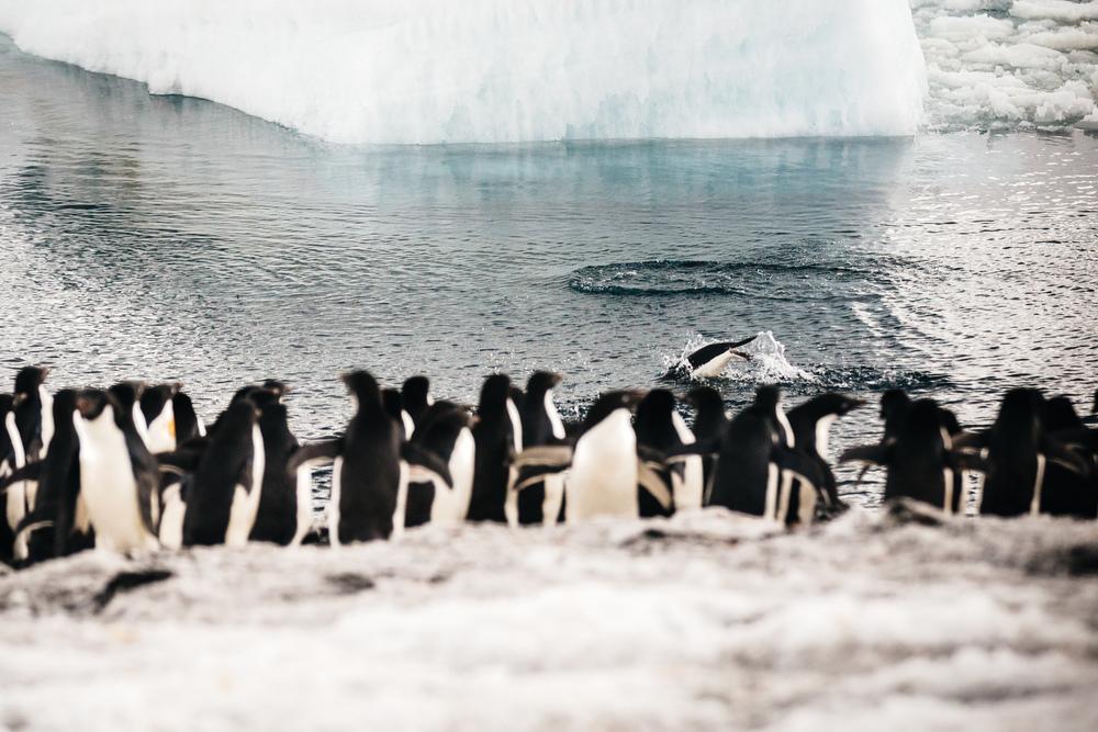 allisonqmccarthy-antarctica-5.jpg
