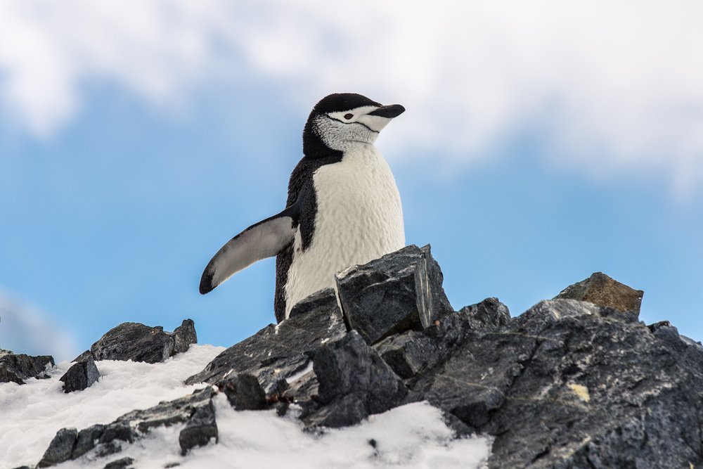 allisonqmccarthy-antarctica-23.jpg