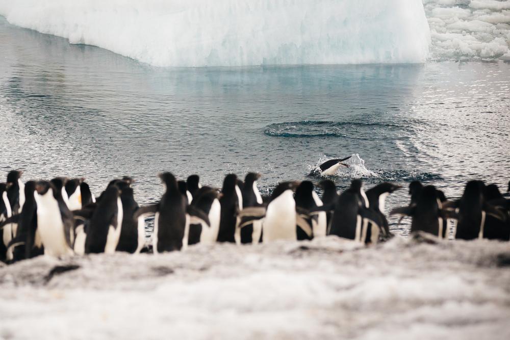 allisonqmccarthy-antarctica-story-2.jpg