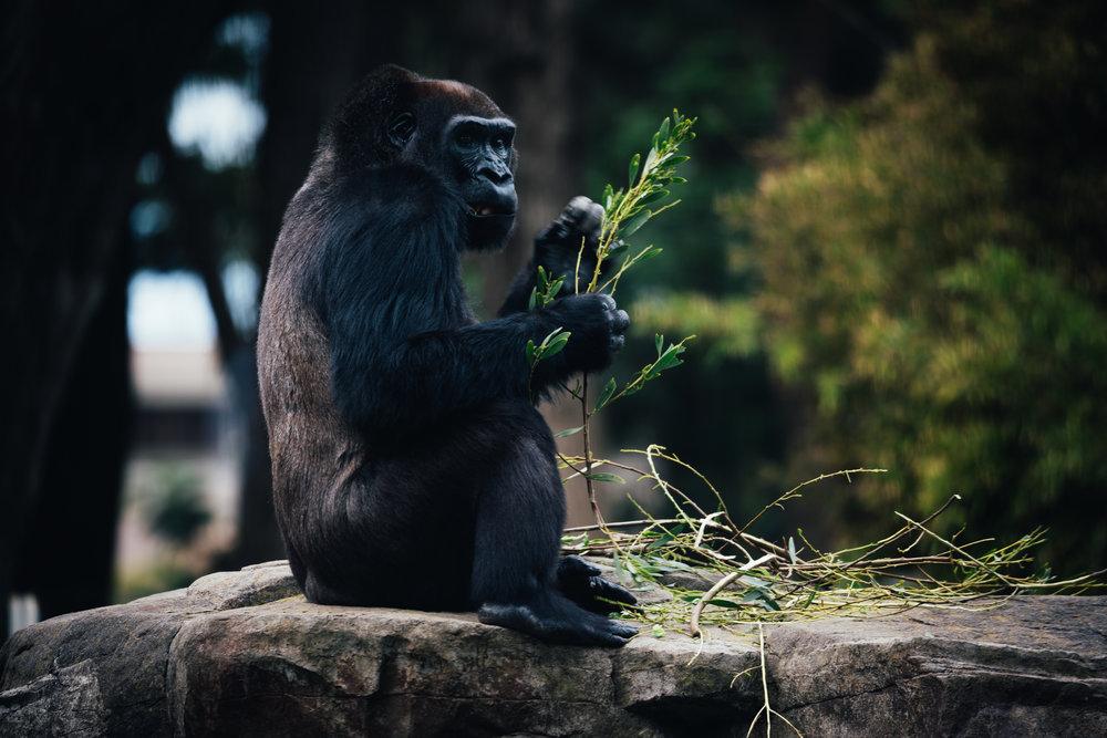 aqm-zoo-5724.jpg