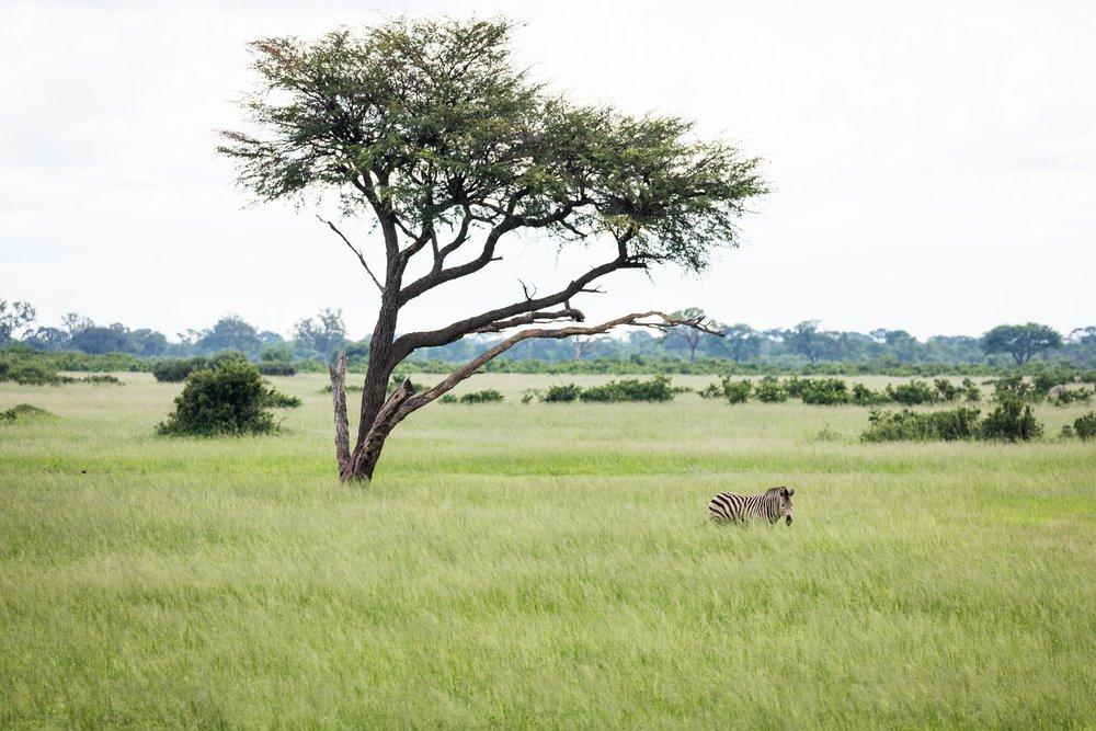 20170116-aqm-africa-6919.jpg