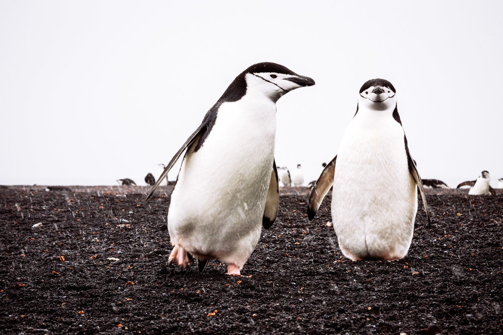 allisonqmccarthy-20141214-antarctica-7607.jpg