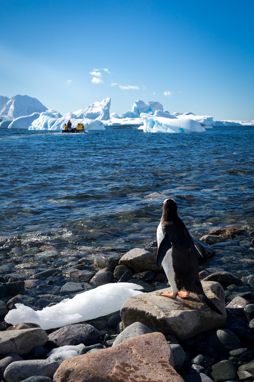allisonqmccarthy-20141212-antarctica-6825.jpg
