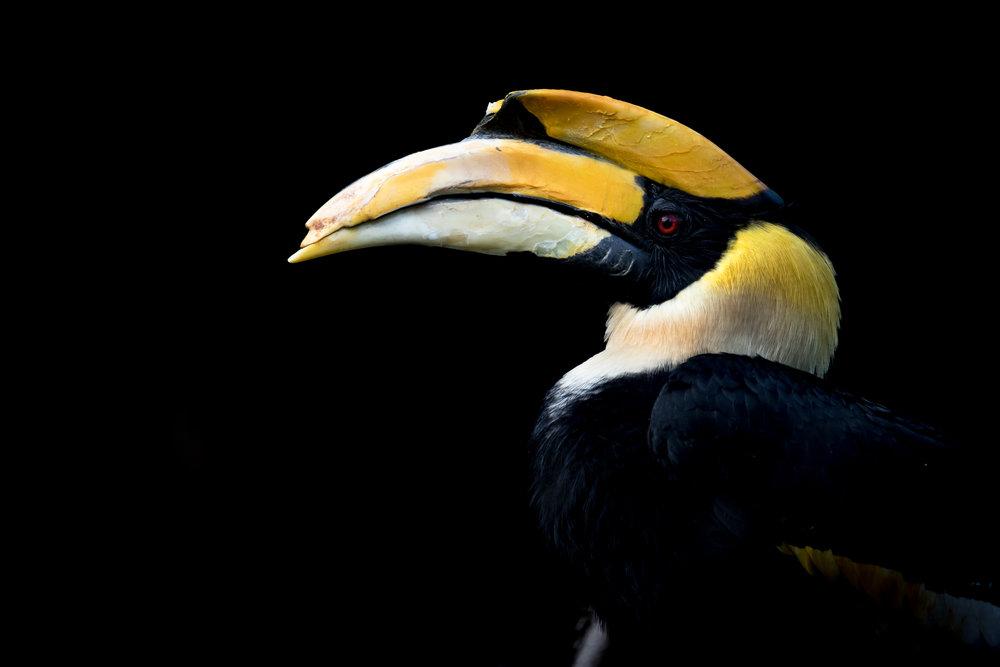 taq-zoo(aqm)-5099.jpg