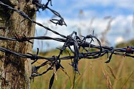new barbed wire.jpg