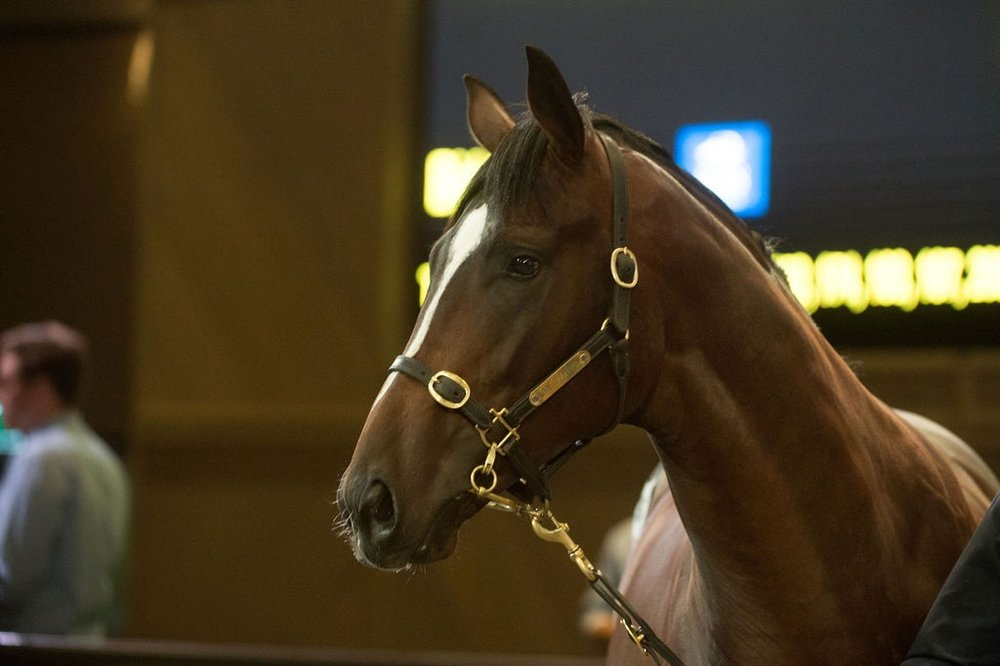 Lot 186 in the auction ring at Inglis Riverside purchased for $220,000.