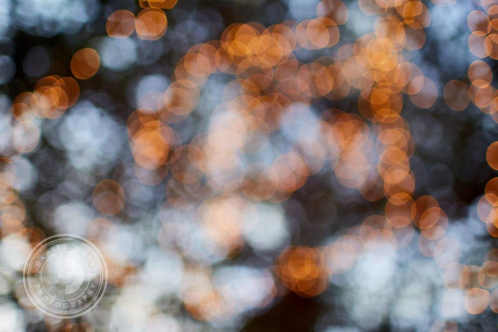 Bossa_Performance_DanielDotyPhotography_04.jpg