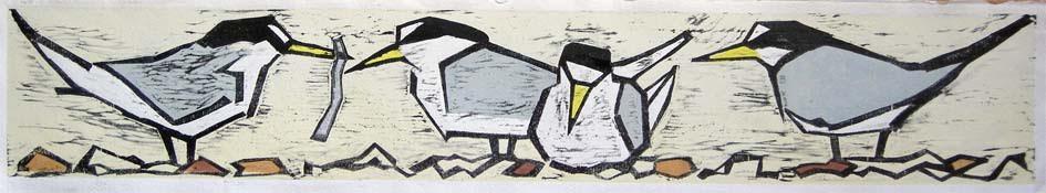 """""""Little Terns"""""""