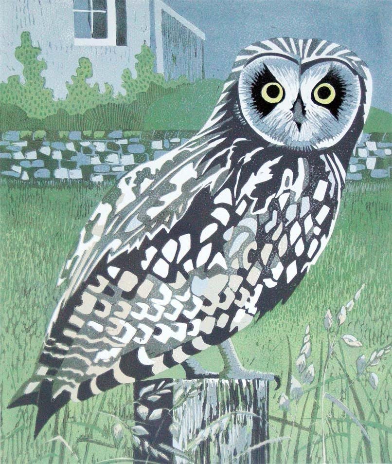"""Short-eared Owl"""