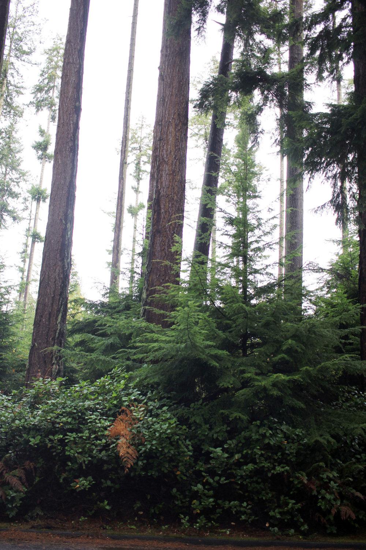 Stanley Park trees