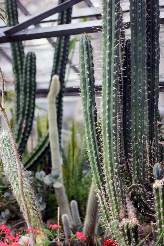 Allan Gardens Toronto Cactus