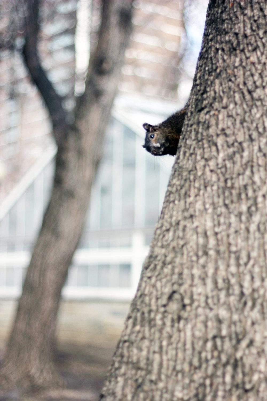 Allan Garden Toronto squirrel