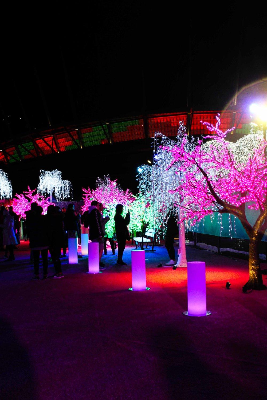 Aurora Fest (14 of 18).jpg
