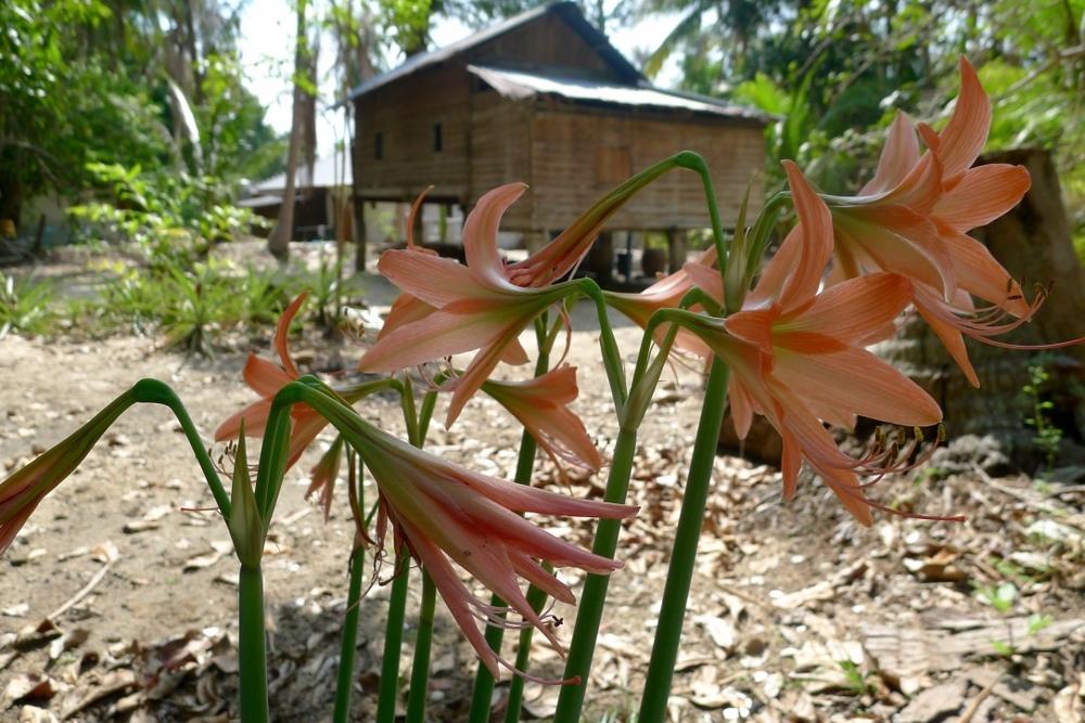 Thai17.jpg