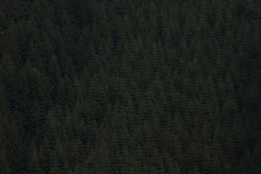Landscape_a_posteriori_Tuma_04.jpg