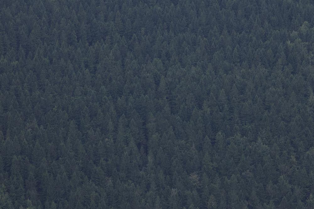 Landscape_a_posteriori_Tuma_08.jpg