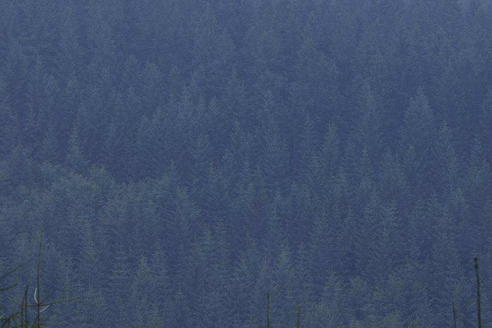 Landscape_a_posteriori_Tuma_13.jpg