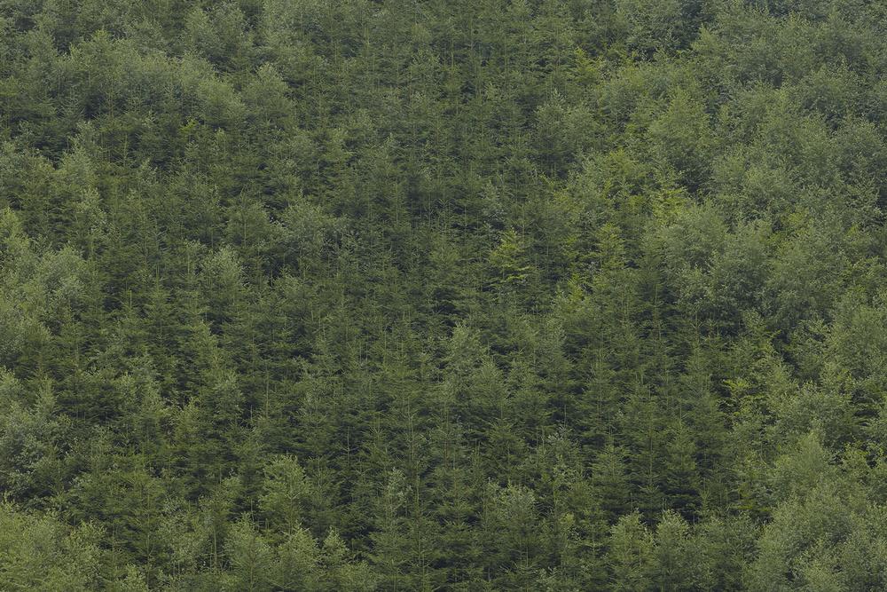 Landscape_a_posteriori_Tuma_12.jpg