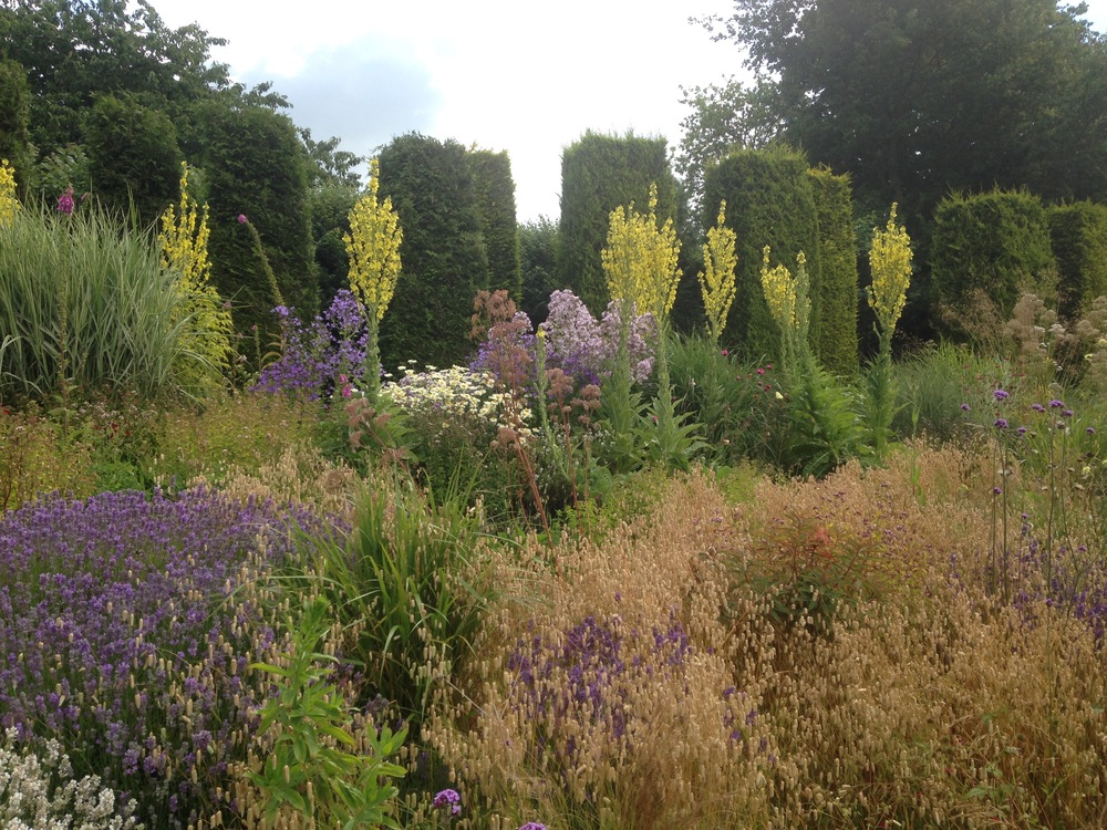 Yorkshire Lavender - Liz Mosley