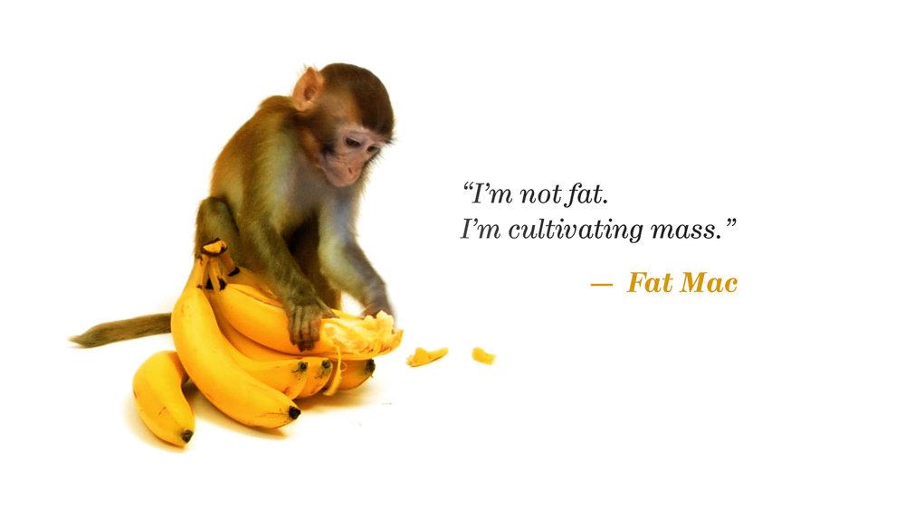 15_IAS_quote_Monkey.jpg