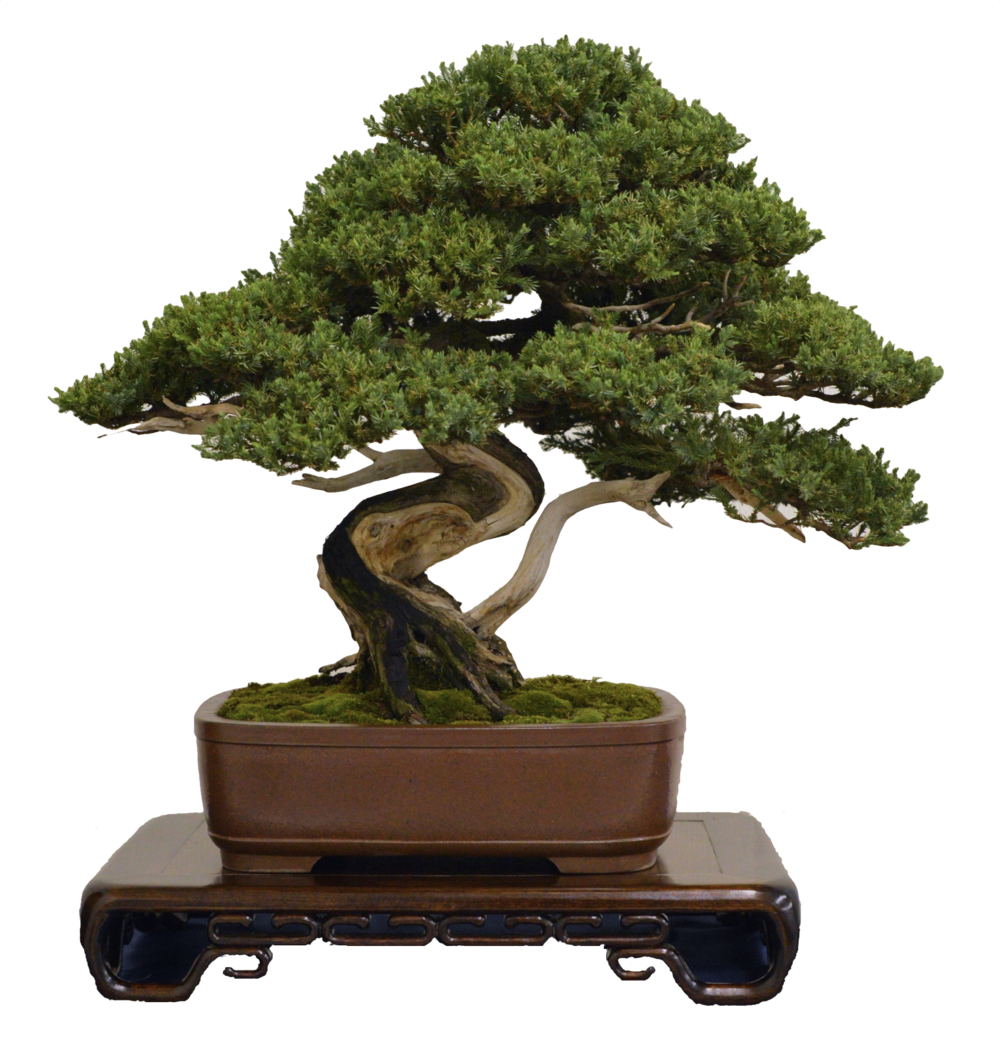 Contact — Bonsai Society of Greater New Haven