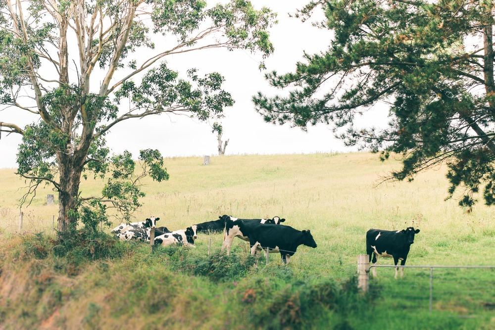 AustraliaByWishNewSky-287.jpg