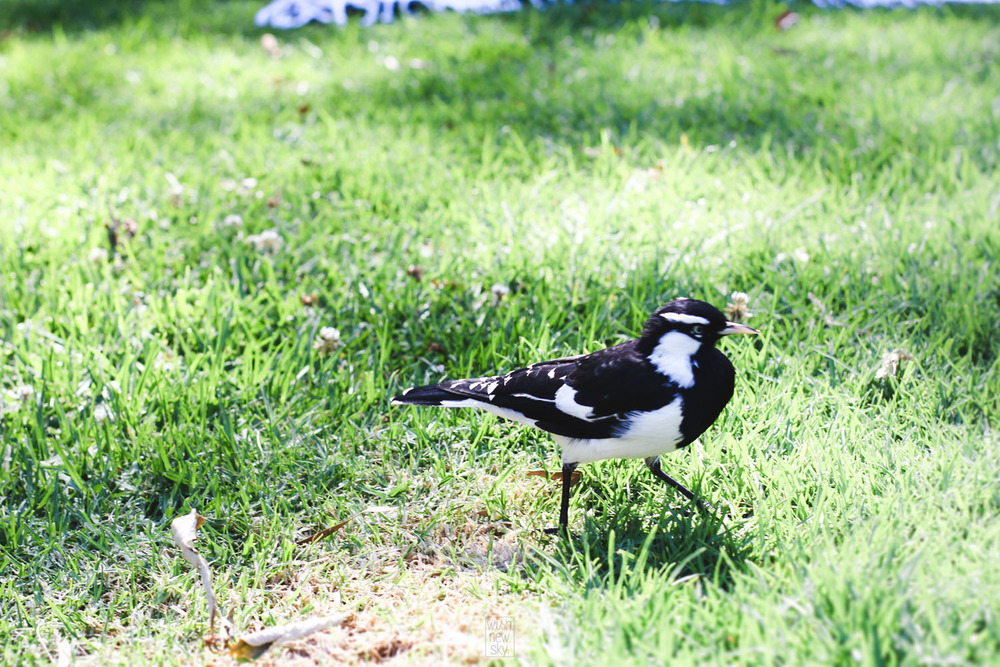 AustraliaByWishNewSky-363.jpg