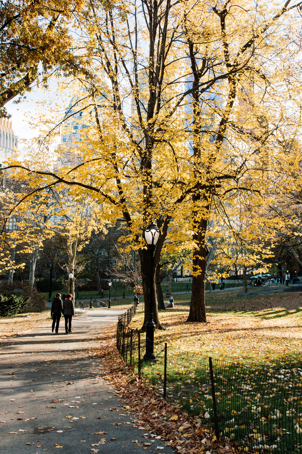 Stroll through Central Park