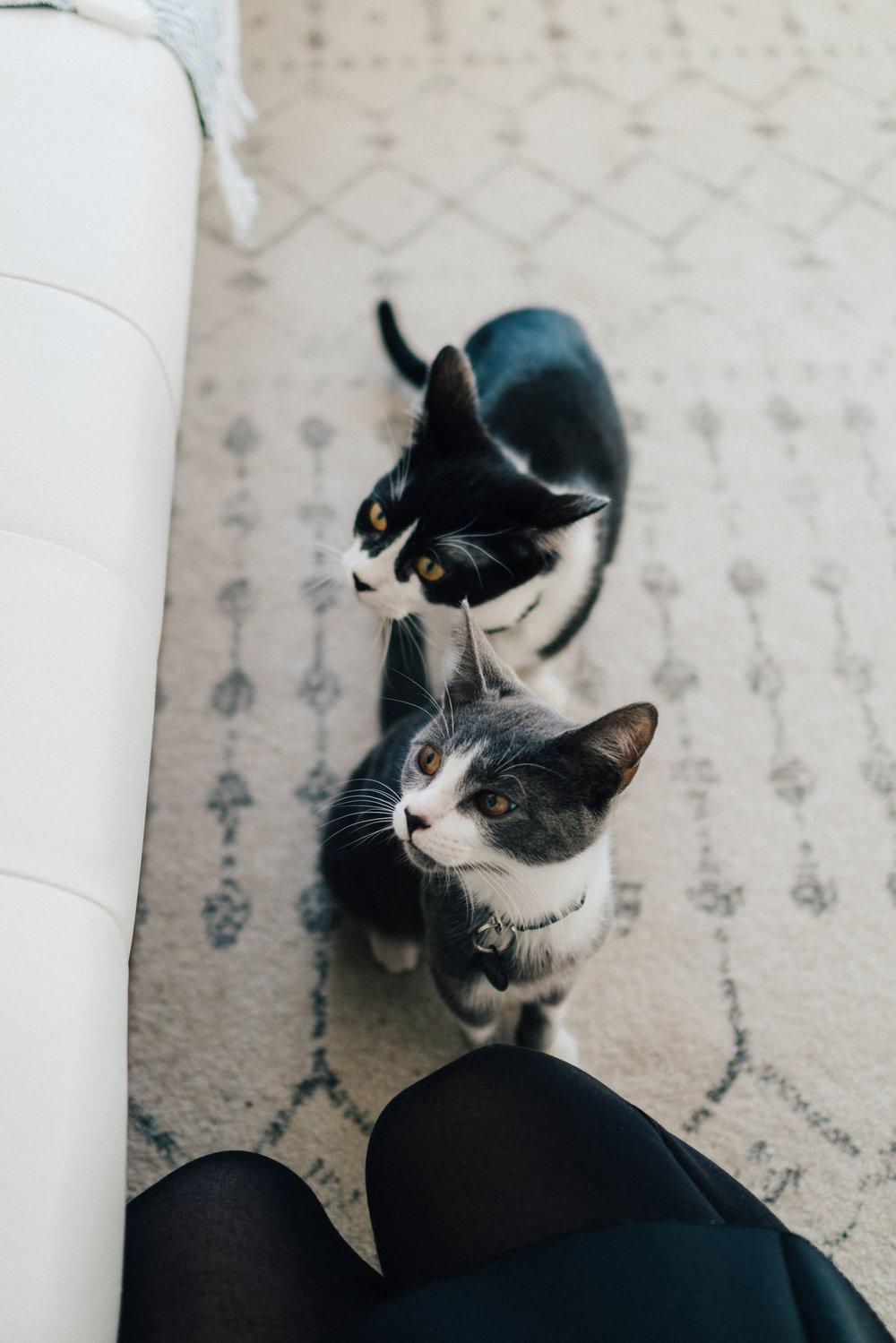 Yujin's kitties Olive and Violet