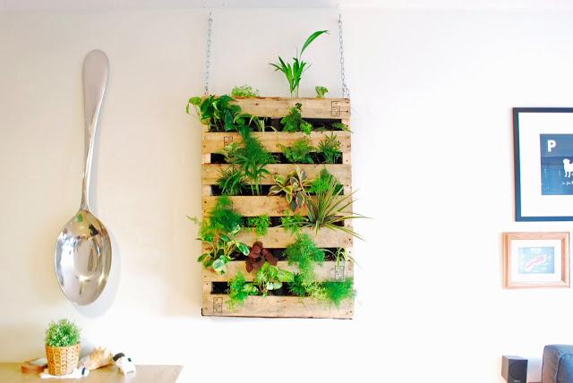 plantas en pallets