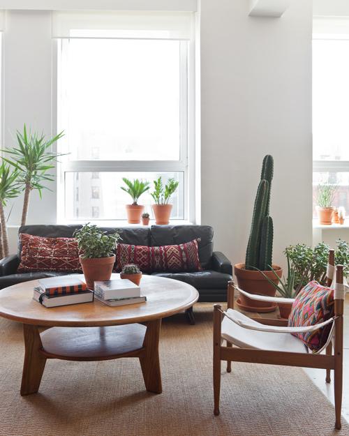 cactus11.jpg