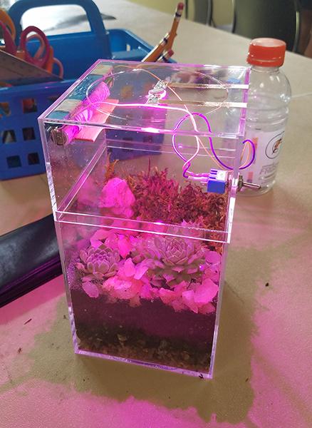 LED Terrariums_DBG (17).jpg