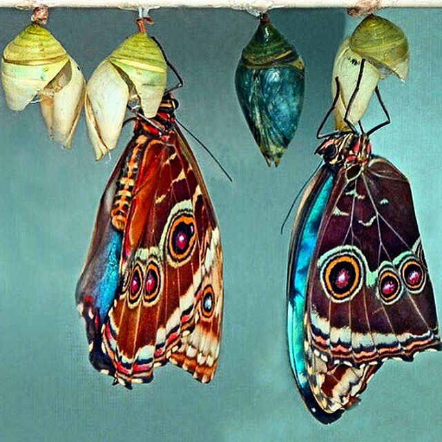 💙Butterflies can metamorphosize, and we can metamoisturize. Transform your skin by caring for it with our products.💙#beauty #Tiossan #nature #earth #natural #greenbeauty #naturalbeauty #butterfly #skincare #beautiful