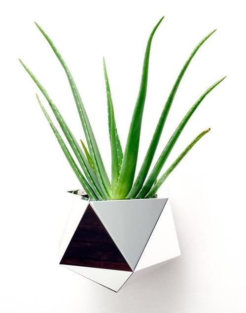 A bold Jade plant in an edgy geo wall planter.  Image Source: Wonder Deco Journal