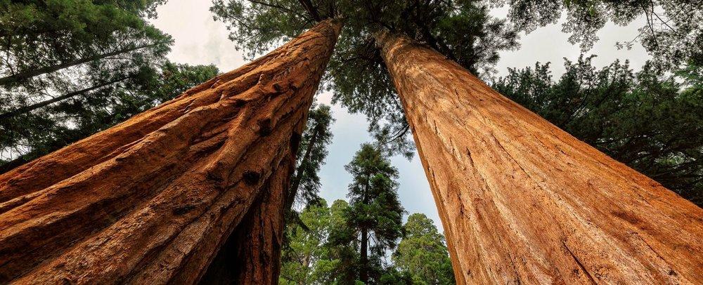 Nov 17   Armstrong Redwoods Hike