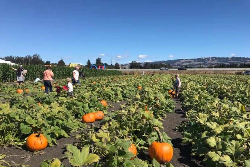There's plenty to explore at this pumpkin patch from a challenging corn maze, farm animals, a corn kernel sandbox and cute fall photo ops.