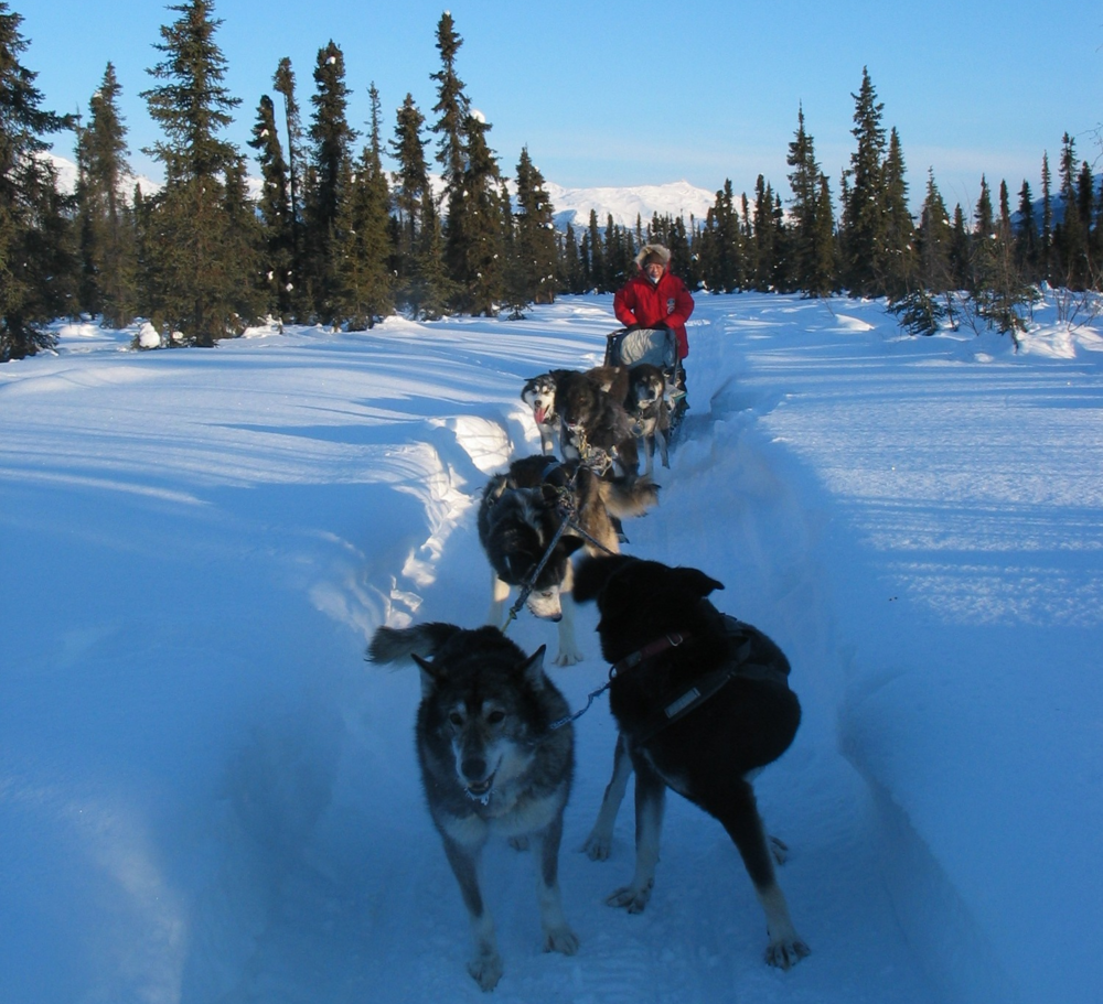 AUR - March 2003 - Guest mushing own team.jpg