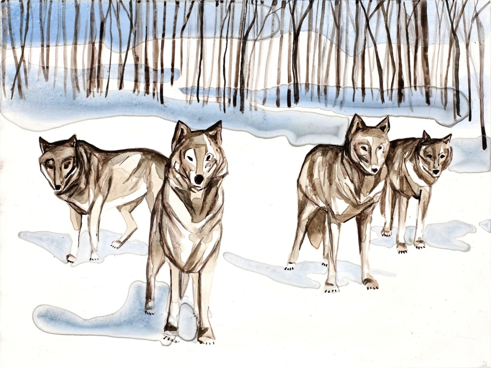 "Wolves 1   9"" x 12""   Watercolor on board   ©Annika Connor"
