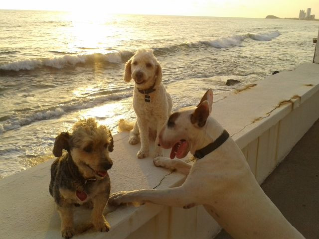 - Marley (center) and friends in Mexico