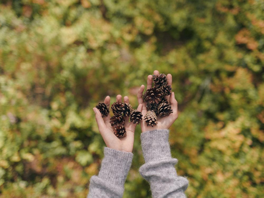 kauniste autumn 2018.jpg