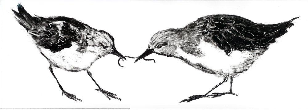 squabble (1).jpg