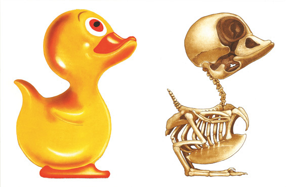 John Kindness, Anatomy of a Rubber Duck II