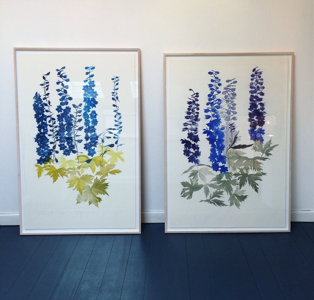 Giant pair of etchings, depicting delpphiniums, by Grainne Cuffe for our MÓR show..jpeg