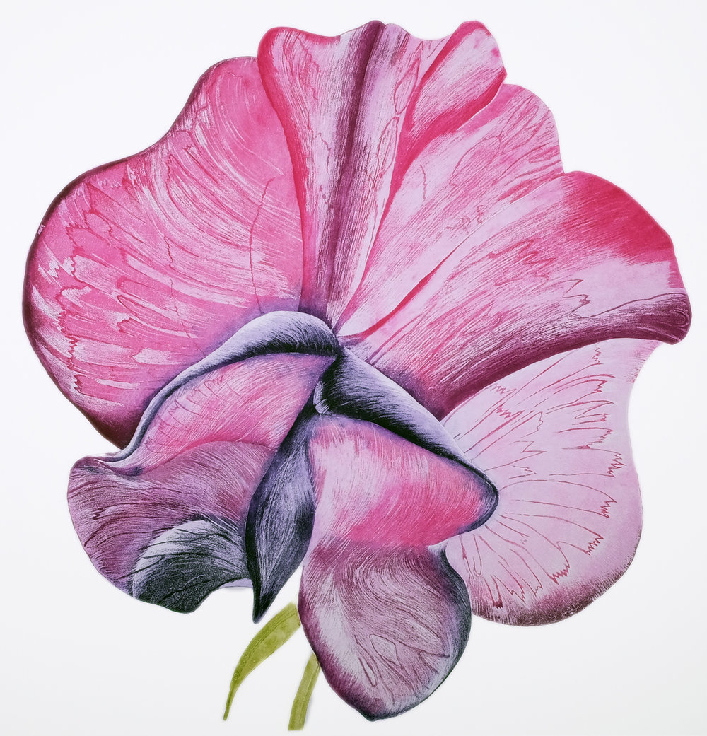 Sweet Pea Papillion, Etching, 114 x 108 cm, €950 unframed / €1,200 framed