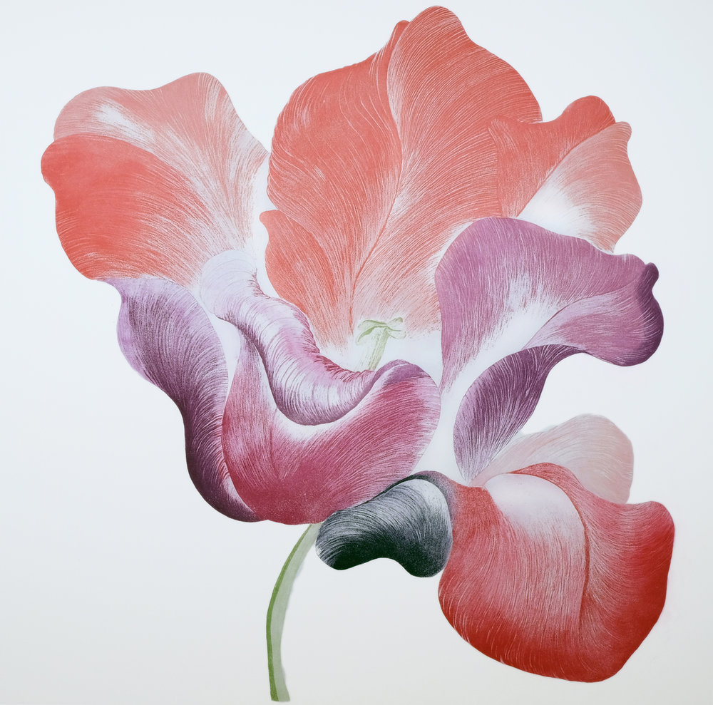 Tulip for Miriam, Etching, 114 x 108 cm,  €950 unframed / €1,200 framed