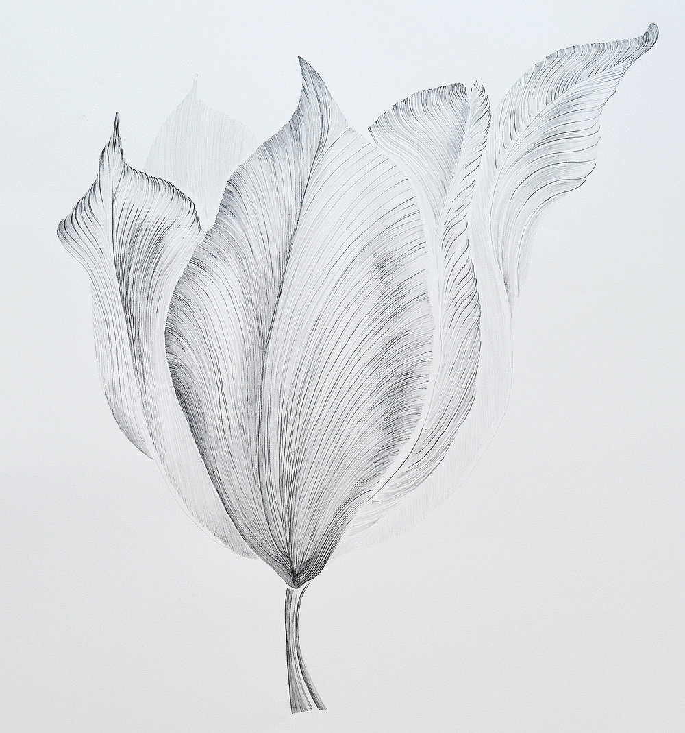 Blushing Lady, Graphite on Sommersset, 106 x 102cm, €1755 framed