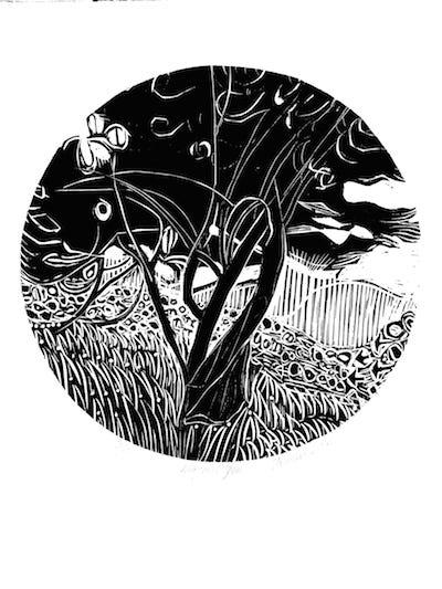 Jenny Lane, Magical Yew, linocut, 36.5 x 36.5 (image size), € 270 unframed