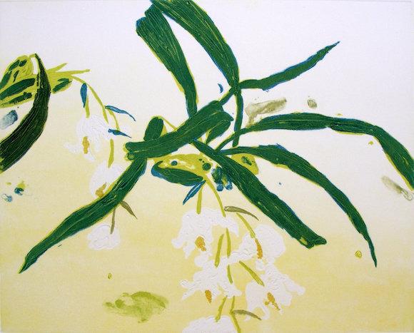 Elizabeth Blackadder, Orchidacea Coelogyne