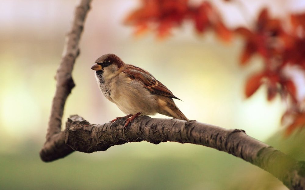 sparrow-tree-branch-bird-87451.jpeg